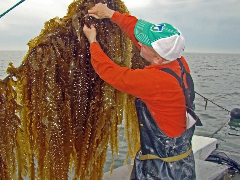 3-D Ocean Farming: Saving Our Seas's video poster