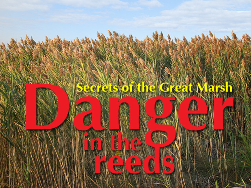 Danger in the Reeds's video poster