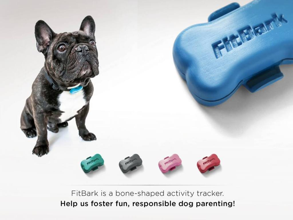FitBark: World's tiniest wireless activity tracker for dogs's video poster