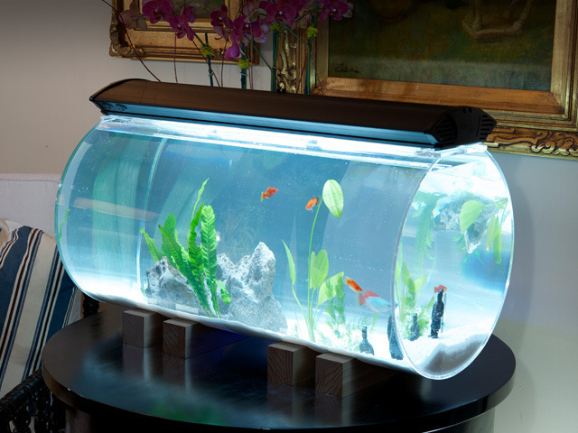 The Isis Aquarium Unique Aquariums For People By