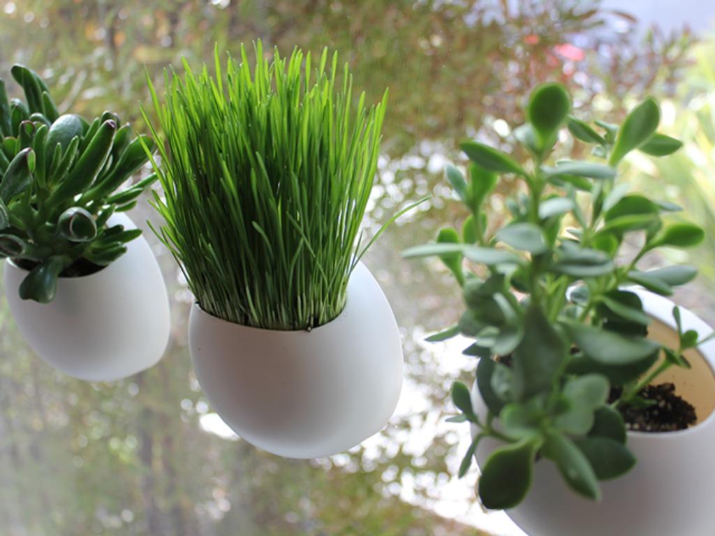 Window Pods - The Perfect Indoor Garden's video poster