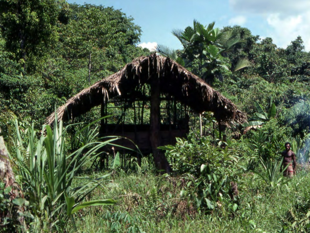 Studies in Papua New Guinea: Architecture, Art and Ecology's video poster