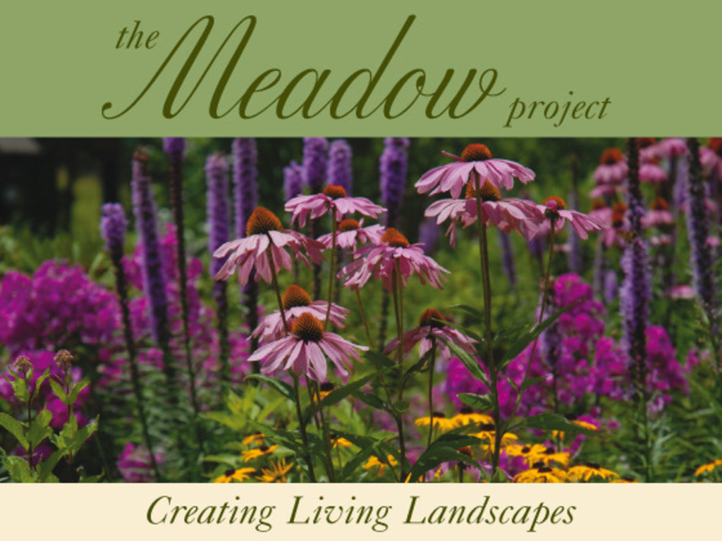 The Meadow Project's video poster