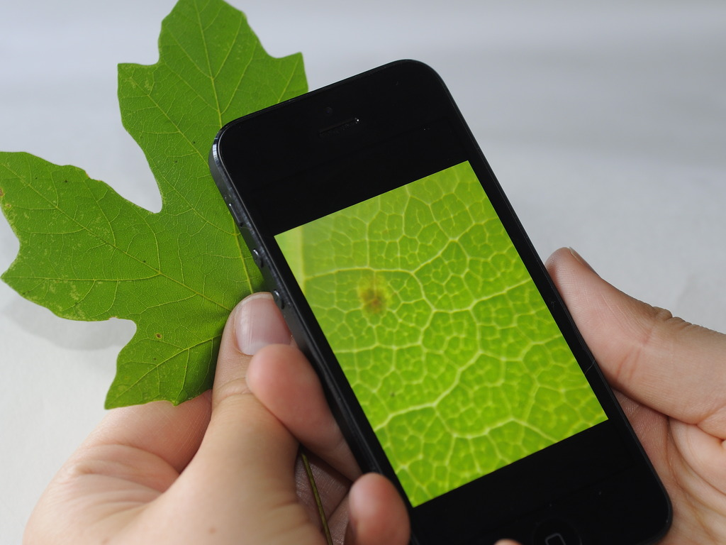 Micro Phone Lens: Cell Phone Based Microscope's video poster