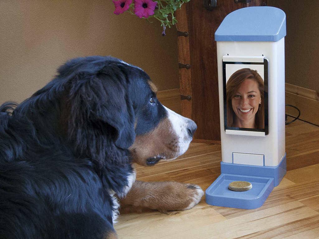 iCPooch -- Internet Enabled Pet Treat Delivery System's video poster