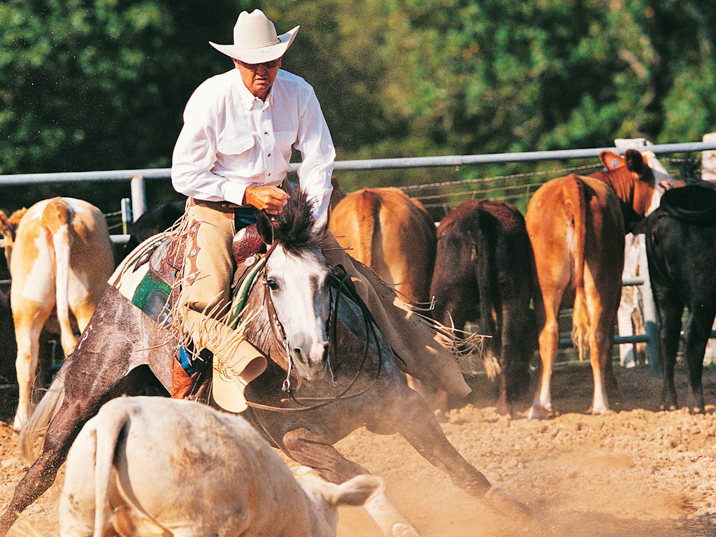 CUTTING HORSE TRAINING SERIES : LEON HARREL's video poster