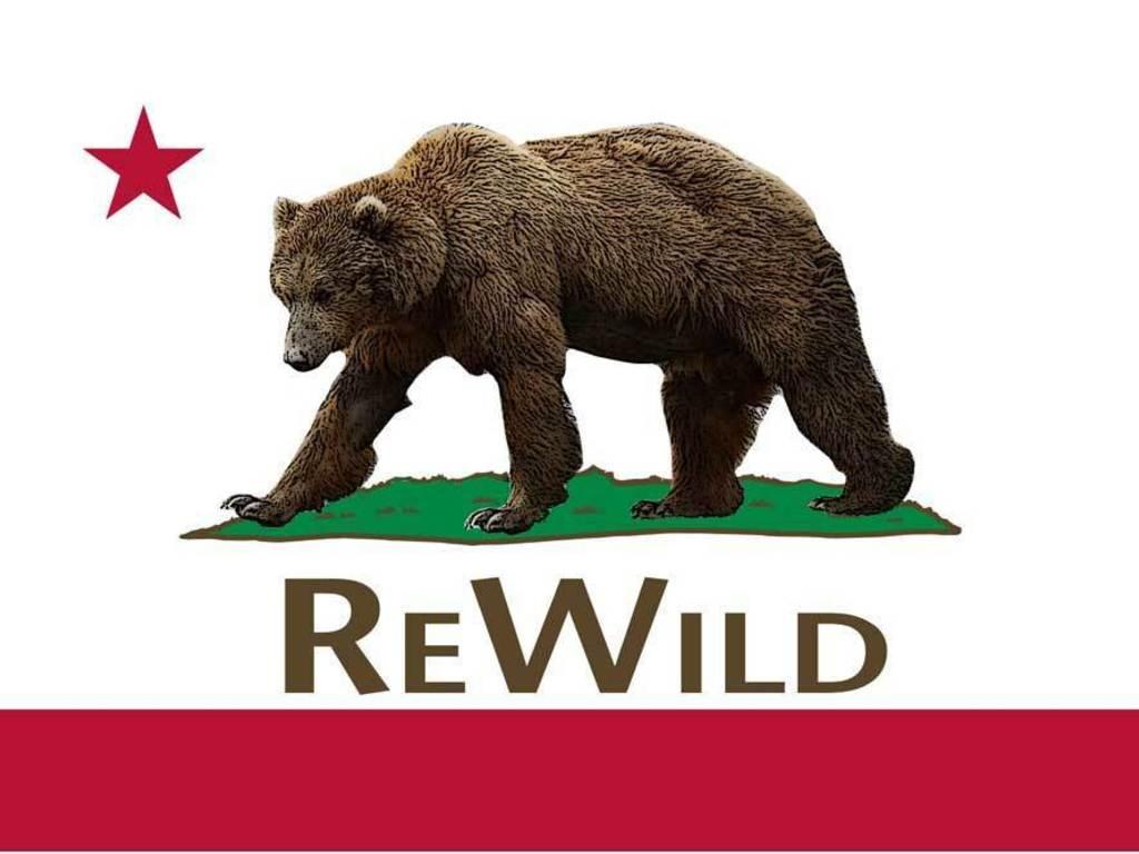 ReWild: Watchdogging California's Wildlife Agencies's video poster