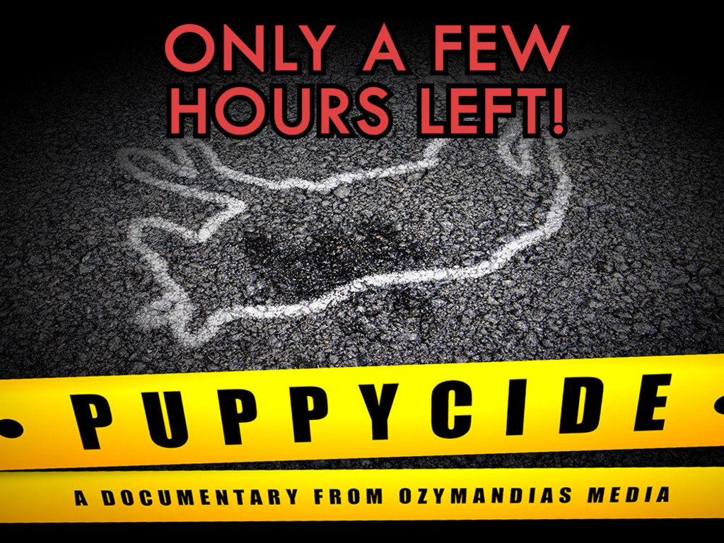 PUPPYCIDE: The Documentary's video poster