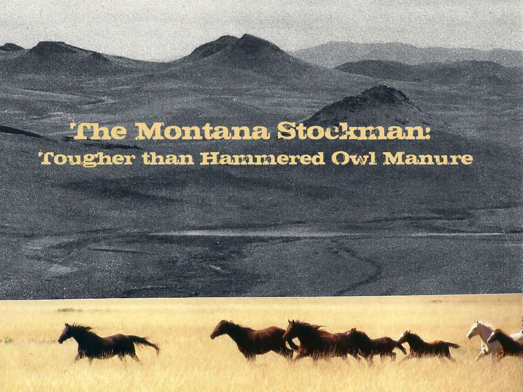 THE MONTANA STOCKMAN:  Tougher Than Hammered Owl Manure's video poster