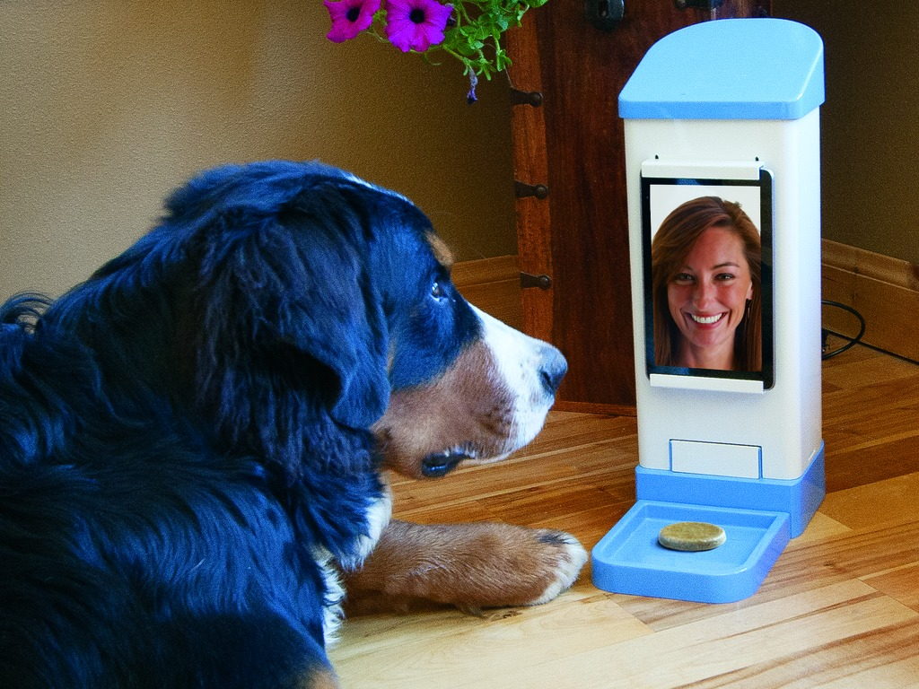 iCPooch -- Internet Pet Treat Delivery & Video Chat's video poster