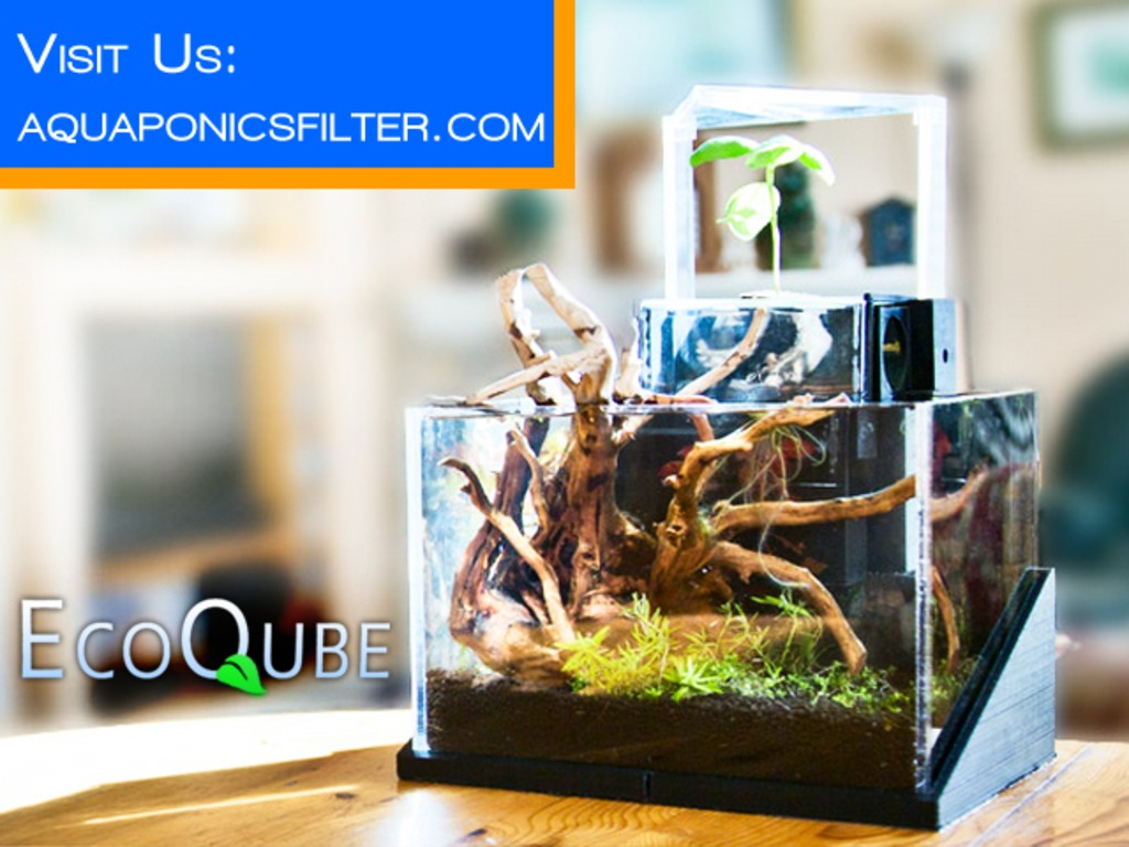 EcoQube- Desktop Ecosystem That Grows Flowers and Herbs's video poster