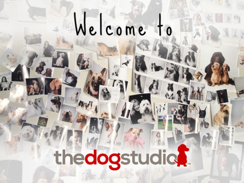 The Dog Studio: A fresh line of greeting cards & stationery's video poster