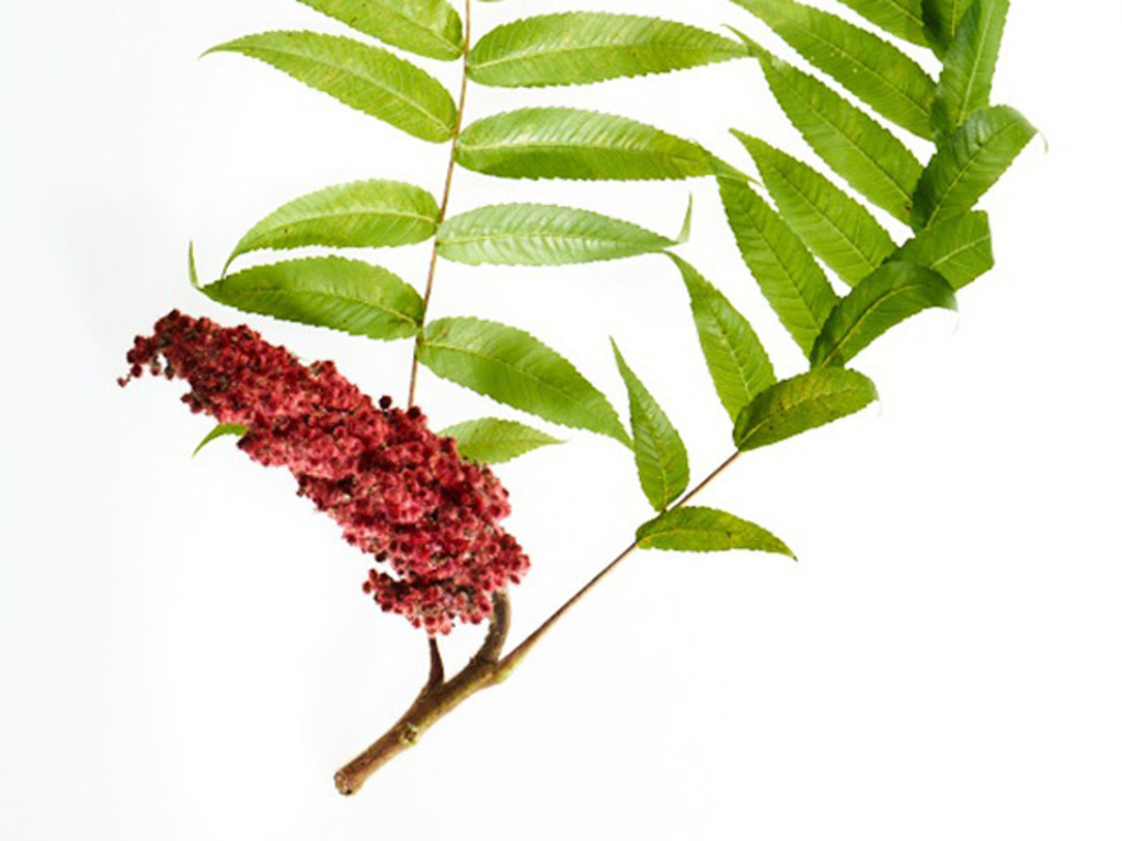 The Wild Farm: Producing Local Sumac Spices's video poster