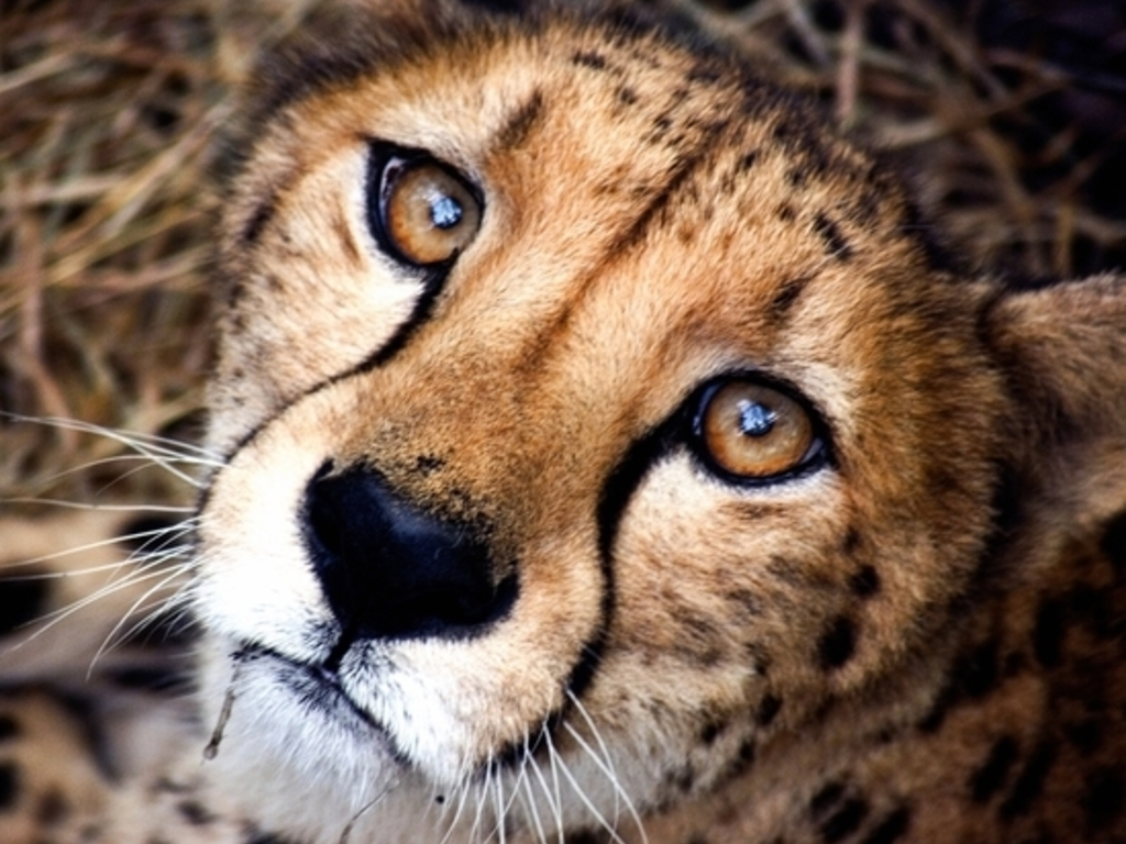 Cheetah Conservation Documentary's video poster