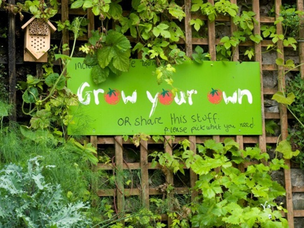 Incredible! Plant Veg, Grow a Revolution's video poster