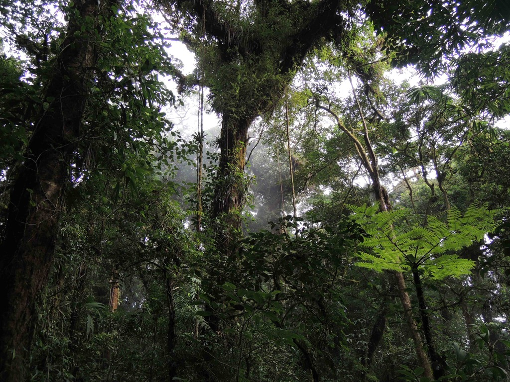 Rainforest Conservation: Making Science Available in Spanish's video poster