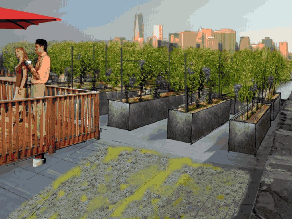 Rooftop Reds Brooklyn Vineyard's video poster