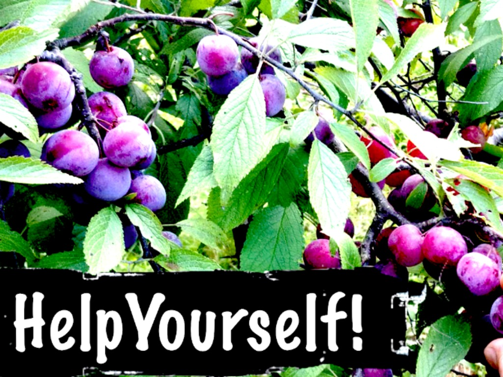 HelpYourself! Public Gardens & Fruit Trees in Northampton's video poster