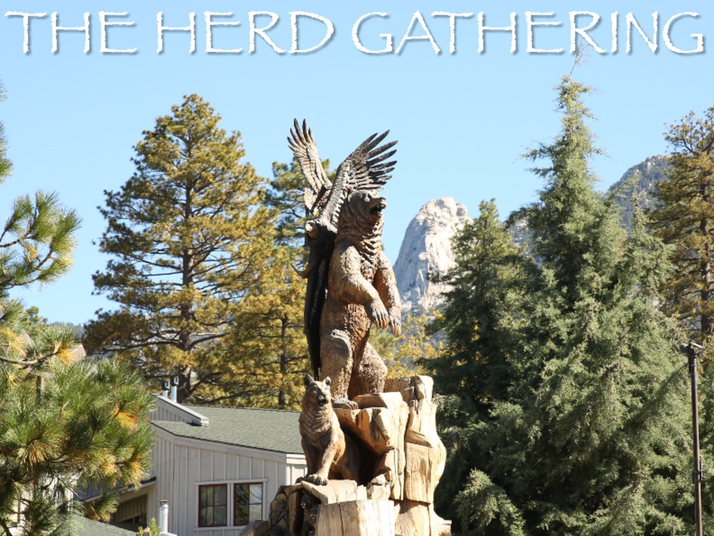 THE HERD GATHERING - Documentary's video poster