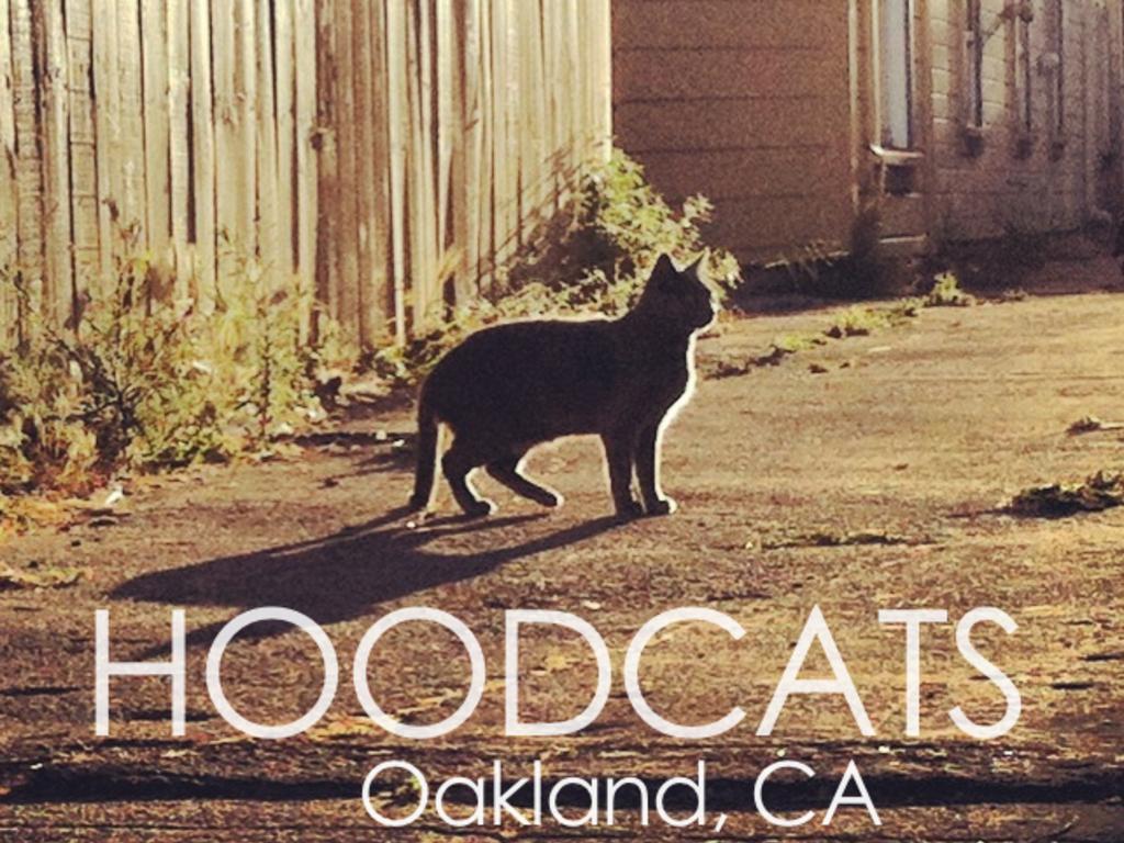 2014 Hoodcats Calendar's video poster