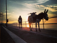 Seaside Donkey: 1000 miles around Wales, with a donkey