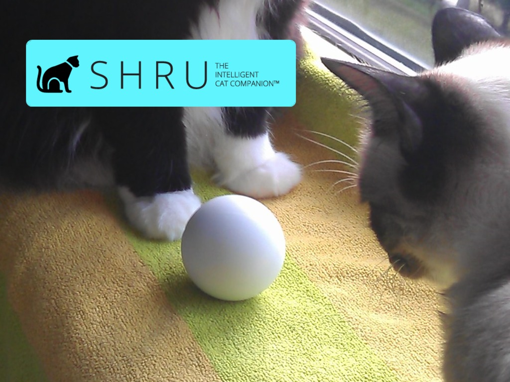 SHRU - The intelligent cat companion's video poster