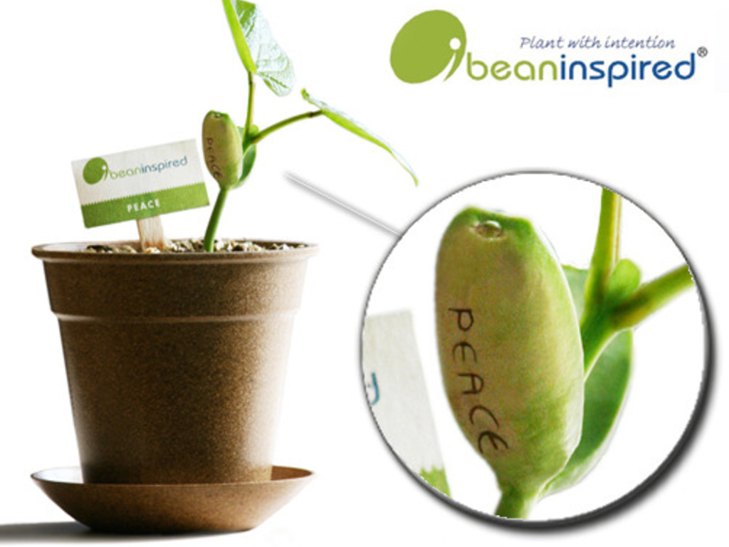 iBeanInspired: Eco friendly gift to inspire a loved one.'s video poster