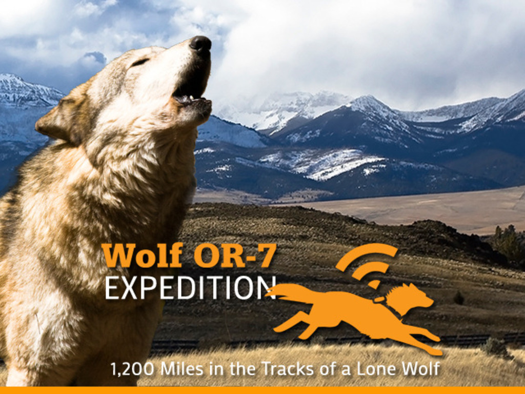 Wolf OR-7 Expedition: 1,200 Miles Following a Lone Wolf.'s video poster