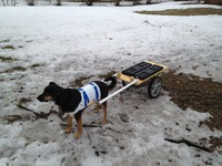 Dog Powered Beer Cart