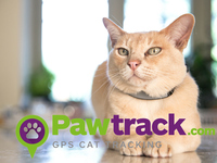 Pawtrack GPS Cat Tracking Collar