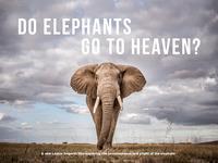 DO Elephants Go To Heaven?