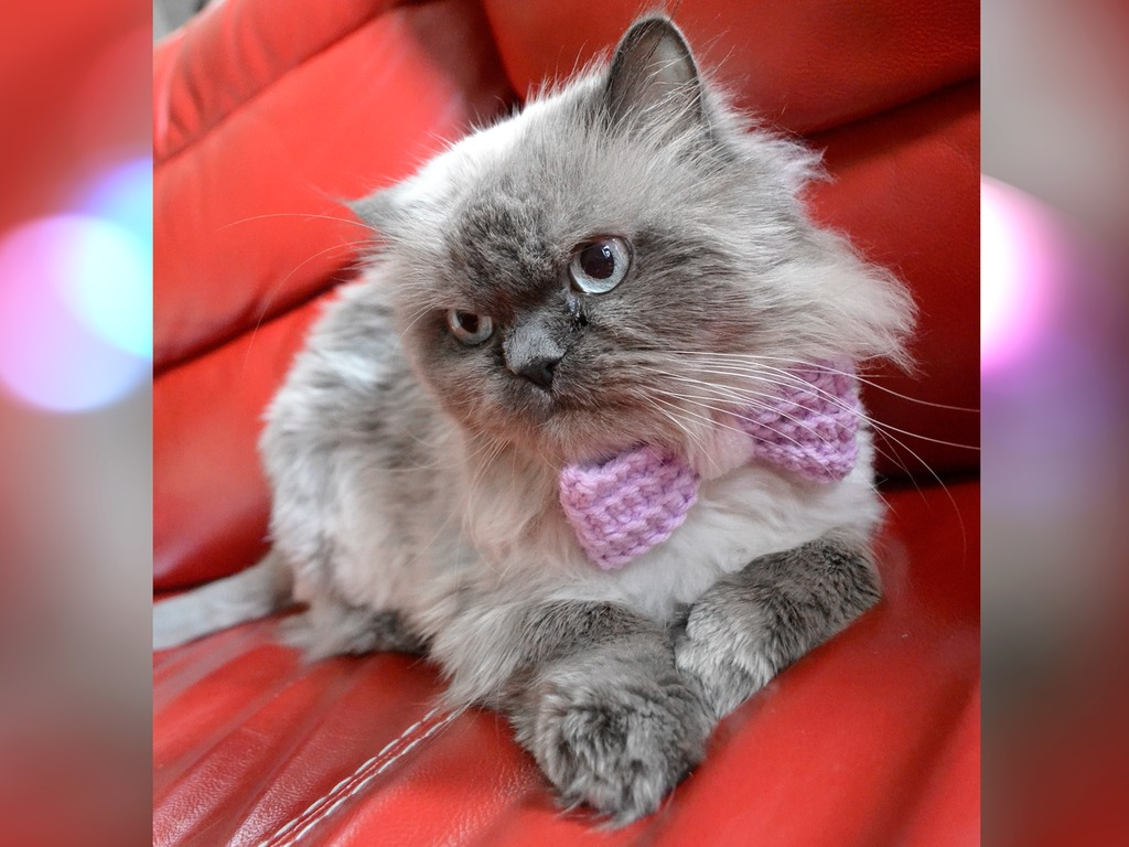 Bow Ties by Rukas the Cat's video poster