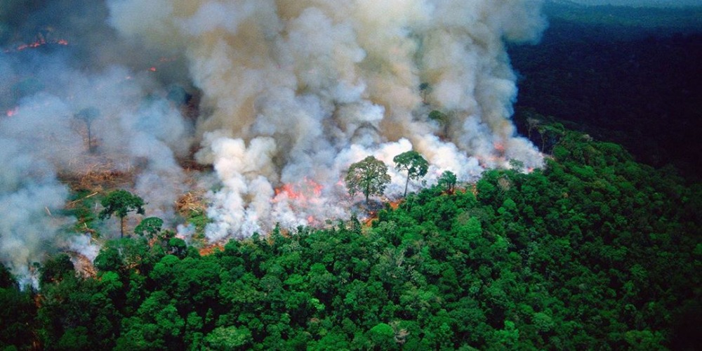 SMH: Who was trying to keep the Amazon Rainforest wildfire on the low?