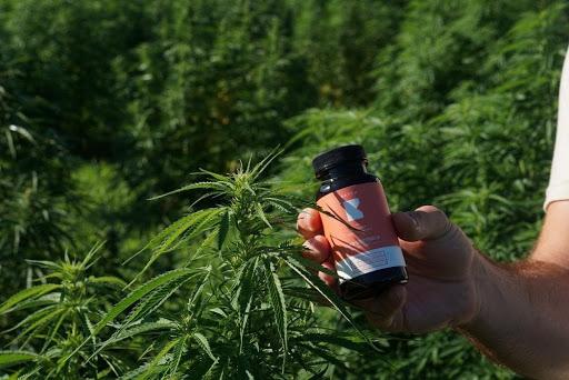 pet proof cannabis