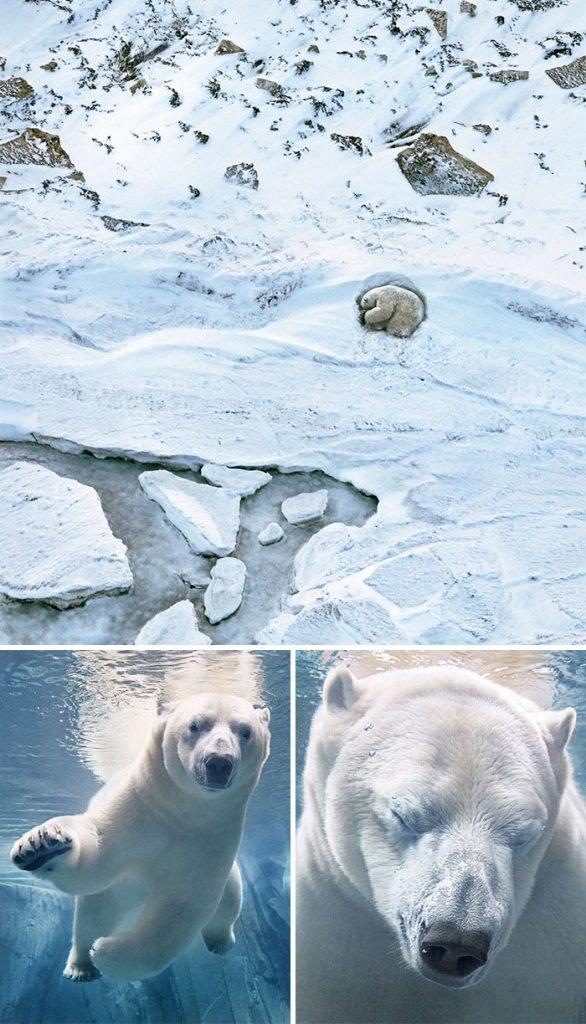 endangered animal photography