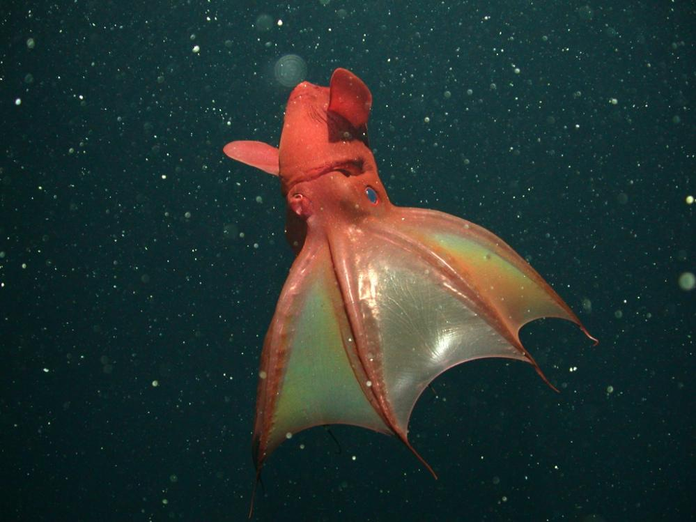 deep sea creatures world oceans day