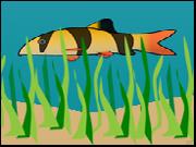 Fish Swim