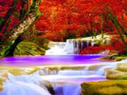 Forest Falls-Hidden Targets