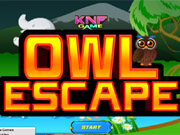 Forest Owl Escape