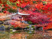 Hidden Target-Red Flowers Garden