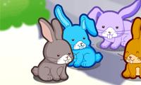Bunny Decoration