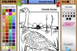 Canada Goose Coloring