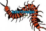 Centipede snake