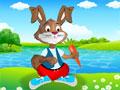 Rabbit Dress up
