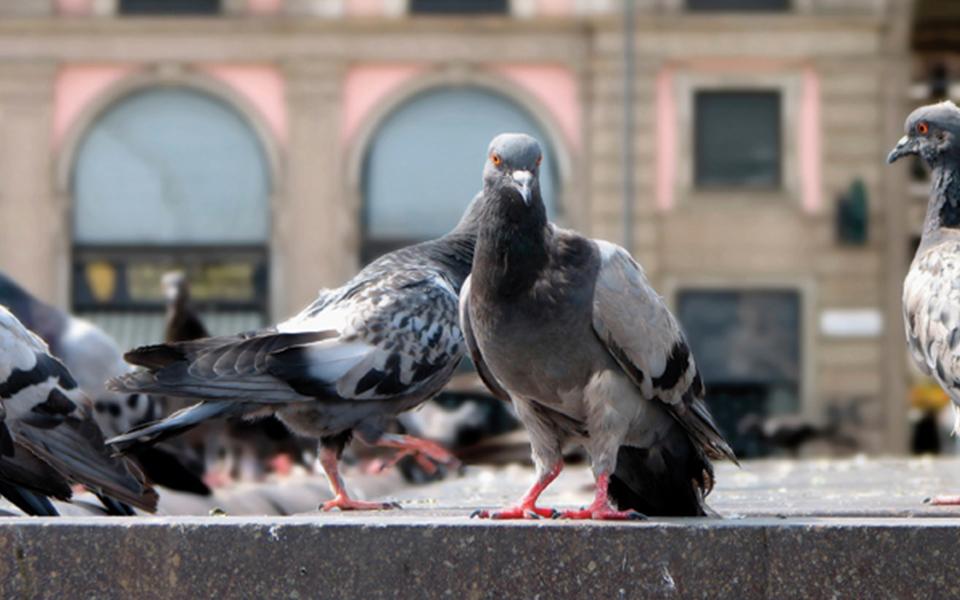 Birds in Restaurants 960x600