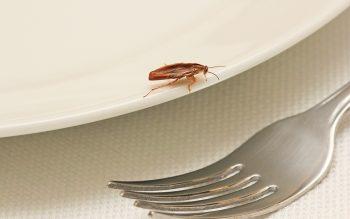 cockroach in restaurant image