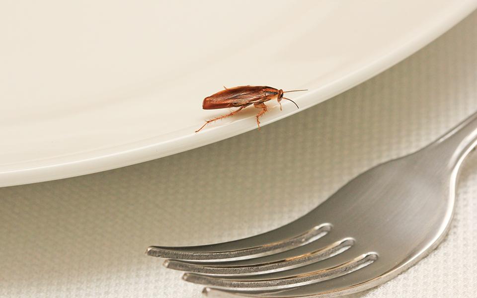 Restaurant Pest Sighting 960x600