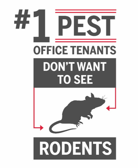 rodent-office-report
