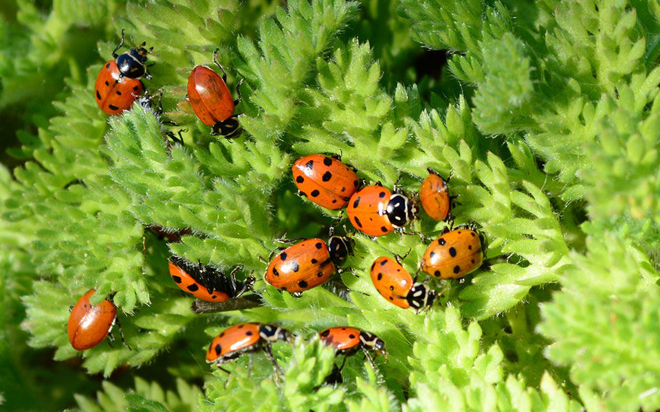 20pcs Micro Landscape Wooden Red Ladybug Garden DIY Decor At Banggood