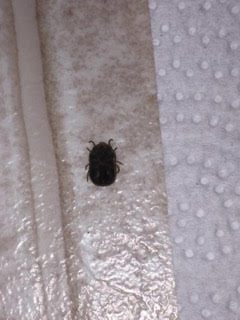 What Are These Small Bugs In My Apartment
